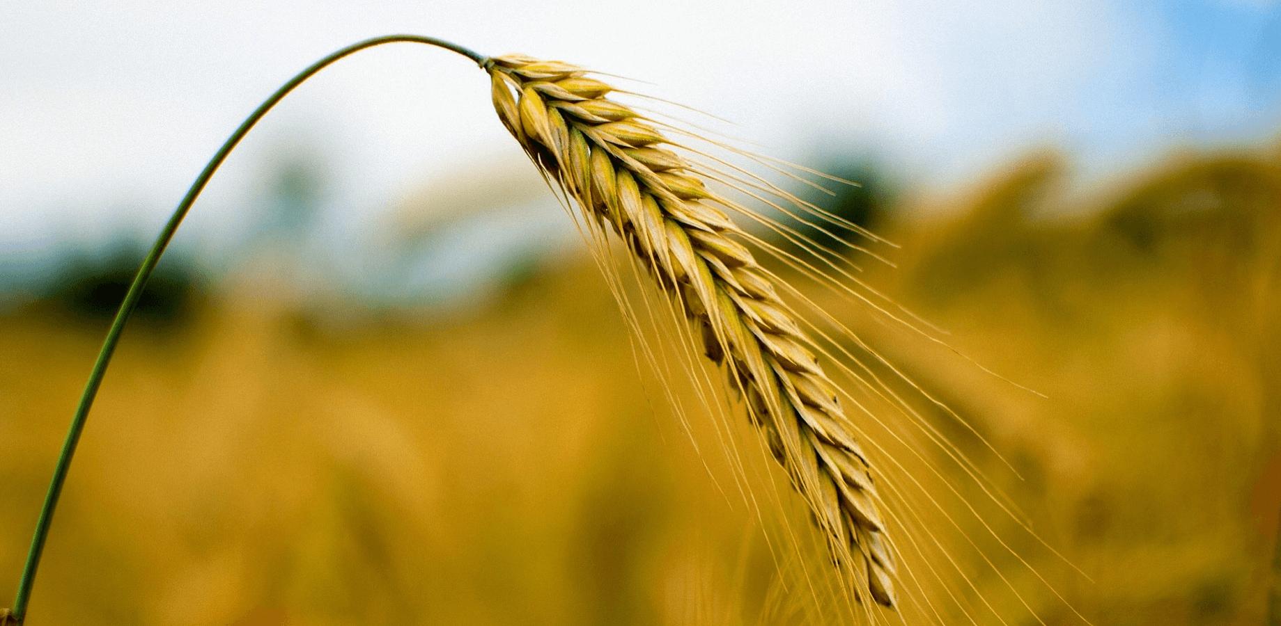 Connected Crops desktop image